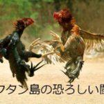 マクタン島の恐ろしい闘鶏