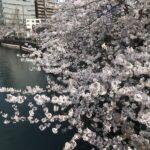 桜とサムライスピリット